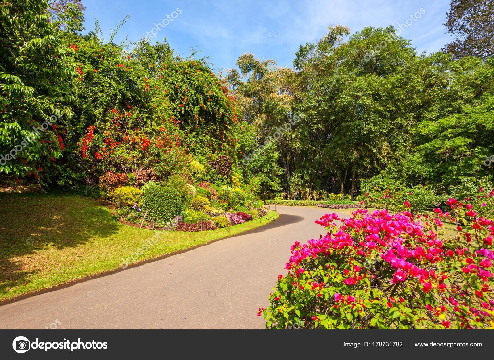 depositphotos stock photo peradeniya royal botanic gardens