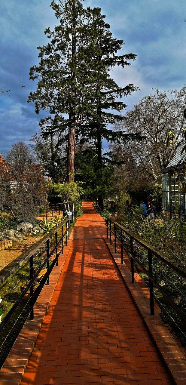 visitando o jardim botanico