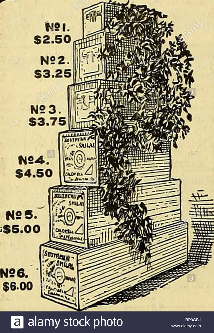 the american florist a weekly journal for the trade floriculture florists 48 the american florist feb 7 msi 250 x u l i p s i quantity per doz american beauties extra select 400 to 500 18to34in 250 to 300 latolsin 150 to 200 per 100 brides bridesmaids and ivory 500 to 1000 meteor golden gates 500 to 1000 liberty 500 to 1200 violetsdouble100to150 violets single 75 to 100 white violets 300 carnations 20j to 300 lily of the valley selected extra long 500 quotquot as good as can be had elsewhere 300 to 400 narcissus paper w RP9GBJ