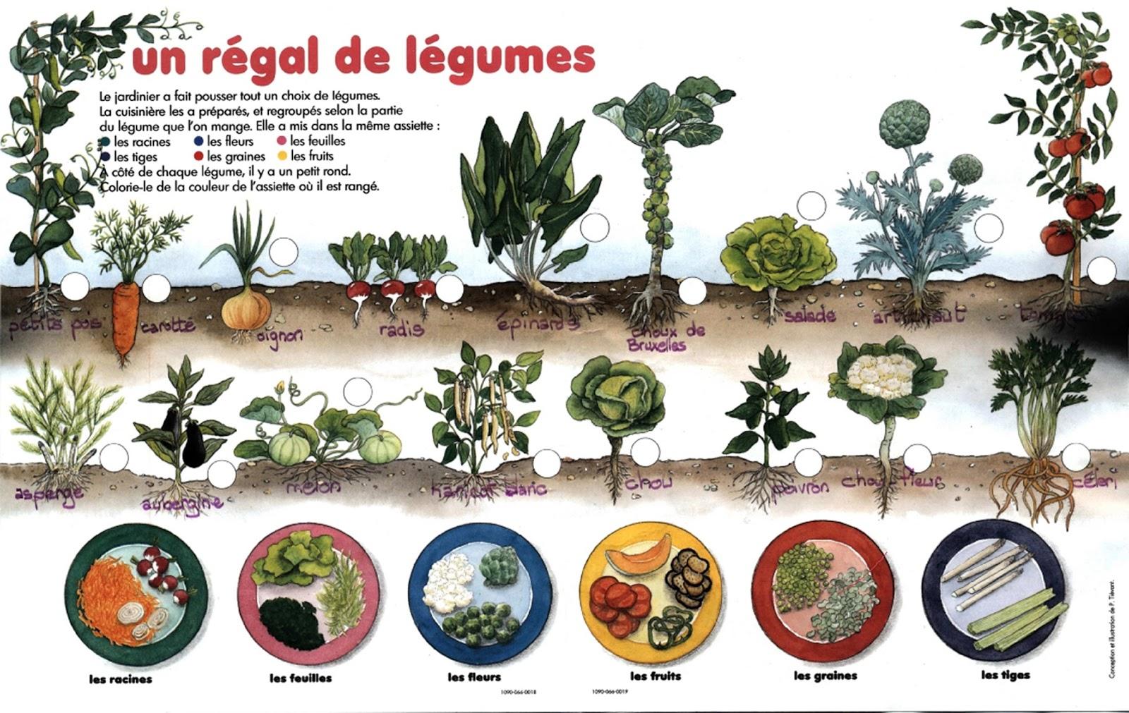 un régal de légumes