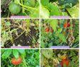 Légumes Du Jardin Frais Cour Te De Nice Farcie Au tofu Vegan