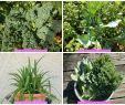 Légumes Du Jardin Frais P¢tes Et Chou Kale Et Maritime En Salade Vegan