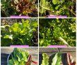 Légumes Du Jardin Inspirant Plat Plet équilibré Et Vegan
