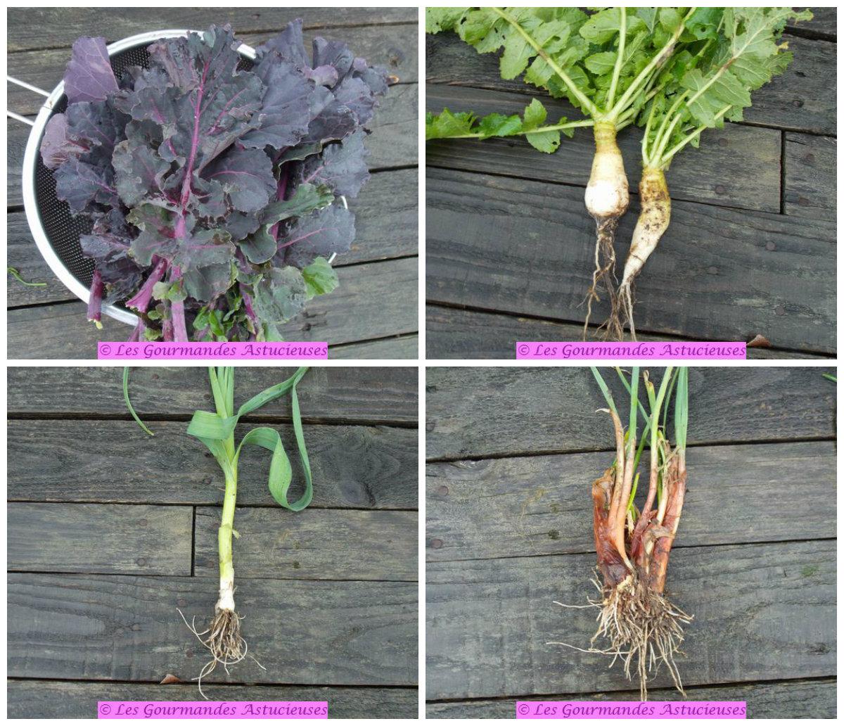 légumes plus près