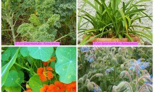60 Nouveau Légumes Du Jardin