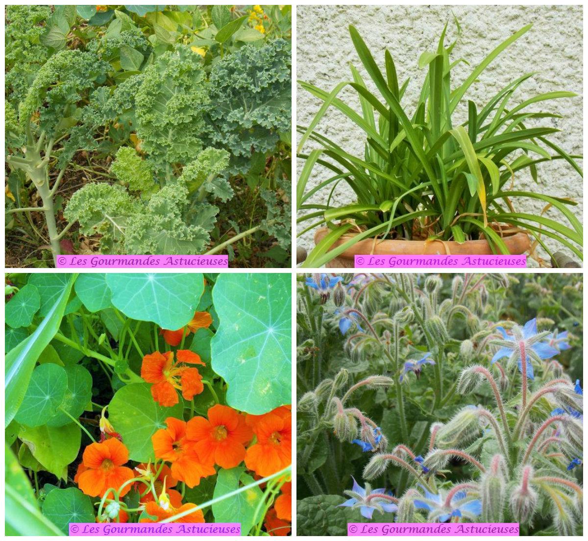 Légumes Du Jardin Unique Chawan Mushi Flan Japonais Au Kale