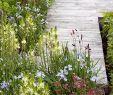 Les Jardin De sologne Génial 2692 Best Gardens Images In 2020