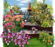 Massif Paysager Unique Jardin Mexicain