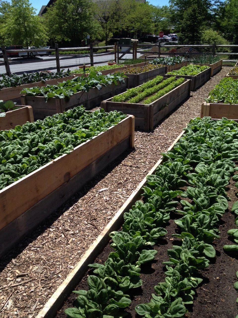 Modele De Jardin Luxe 15 Raised Bed Garden Concept Suggestions Of 60 Luxe Modele De Jardin