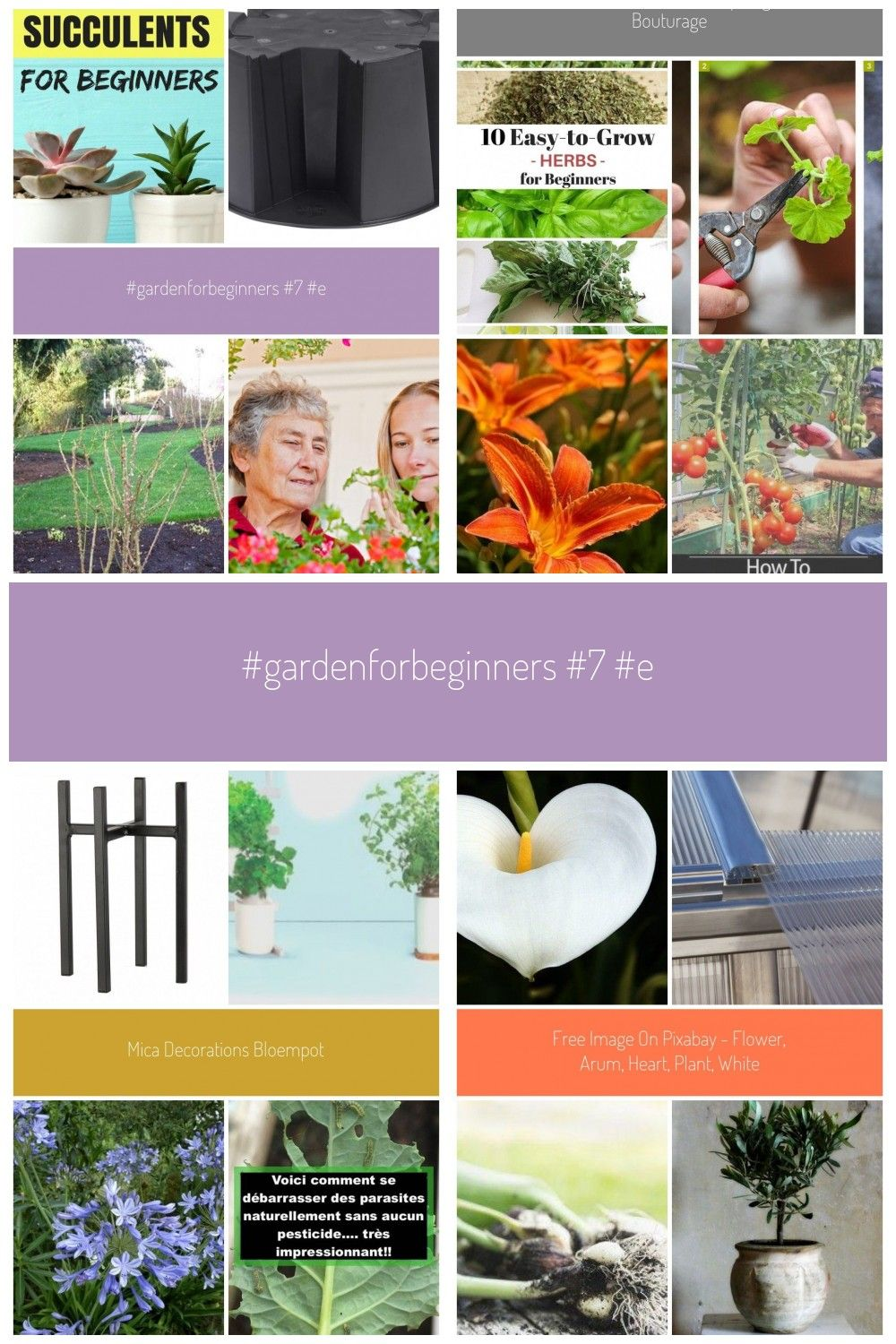 Nettoyage Jardin Génial Gardenforbeginners 7 Easy to 7 Easy to Grow Succulents for Of 32 Luxe Nettoyage Jardin
