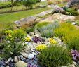 Paysager son Jardin Élégant Un Jardin Breton D Agapanthes Et D Hortensias Bleus