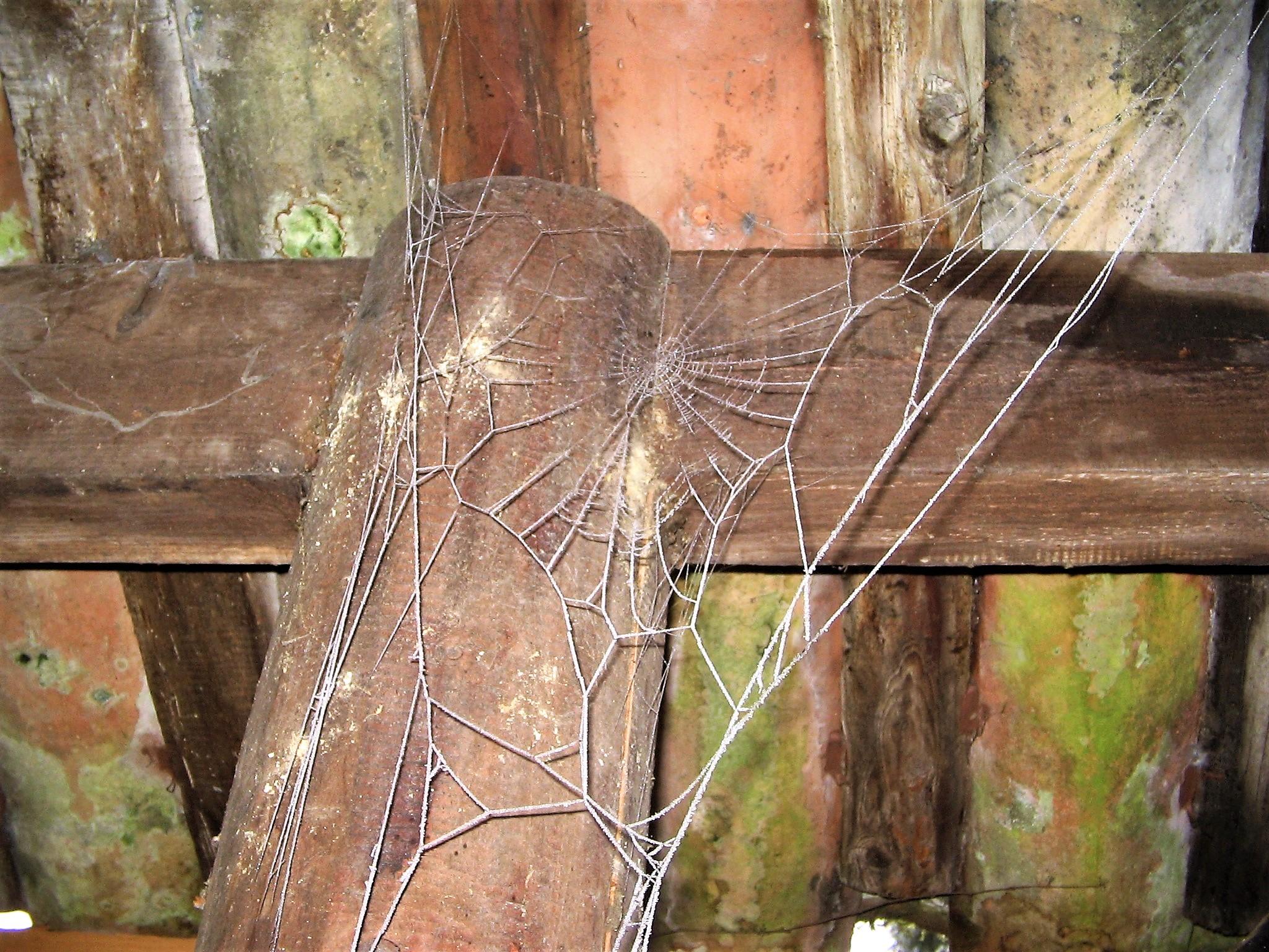 telle une dentelle une toile d araignee givree du jardin de Sainte blandine JPG