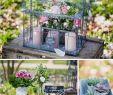 Serre De Jardin Polycarbonate Beau Mini Serre Succulentes Déco Et Fleurs by Féelicité
