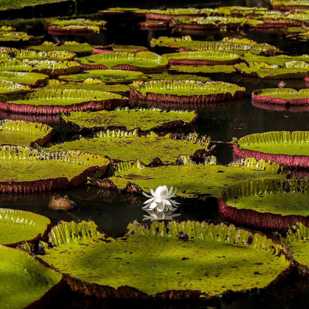 MRU jardin de pamplemousses un univers d odeurs et de couleurs 1 1 1024x1024