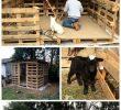 Amenagement Abris De Jardin Luxe Amazing Furniture Ideas with Shipping Wood Pallets