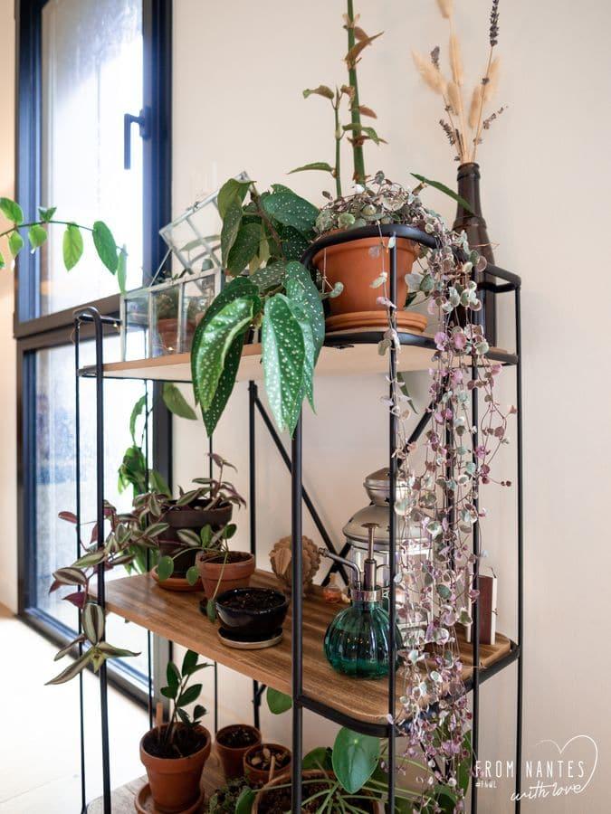 Coté Jardin Nantes Beau Crazyplantlady – Aménager Un Mini Jardin Des Plantes Chez soi