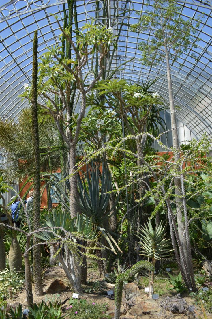jardin plantes nantes 27 e
