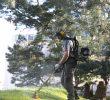 Entretien Parc Et Jardin Best Of Au Fil Des Arbres Entretien Parcs Et Jardins 42 Au Fil