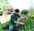 Entretien Parc Et Jardin Best Of Entretien Du Jardin