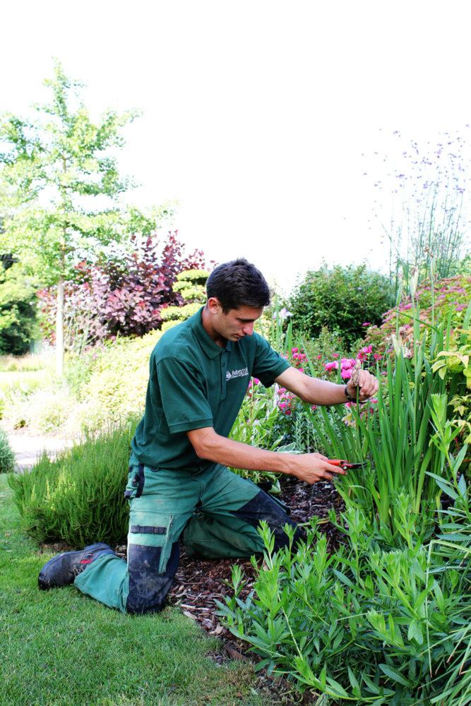 taille entretien jardinier paysagiste limoges modifie e