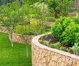 Entretien Parc Et Jardin Élégant Vert Et Jardin