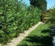 Entretien Parc Et Jardin Inspirant Entretien Espaces Verts  L Honor De Cos Tarn Et Garonne 82