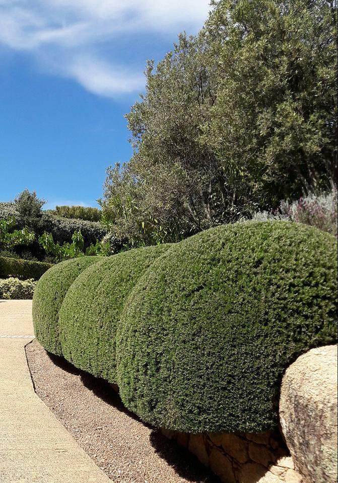 details entretien parcs et jardins un service personnalise a porto vecchio 111