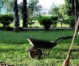 Entretien Parc Et Jardin Luxe Paysagiste Antibes Entretien & Aménagement De Votre