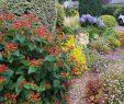 Entretien Parc Et Jardin Nouveau Erwann Paysage
