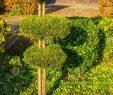 Entretien Parc Et Jardin Unique Arbre Taillé De Conif¨re En Cercles Ronds Jardin