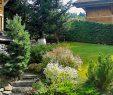 Entretien Parc Et Jardin Unique Maintenance Of Green Spaces Mabboux Paysagiste