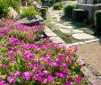 Faire Une Dalle Béton Pour Abri De Jardin Beau Allée De Jardin Nos Conseils Pour La Réaliser C´té Maison