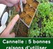 Fourmis Dans Le Jardin Frais Cannelle 5 Bonnes Raisons D Utiliser Cette Délicieuse