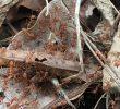 Fourmis Dans Le Jardin Luxe Les Fourmis De Jardin Battent Sur La Lame Verte sous Le
