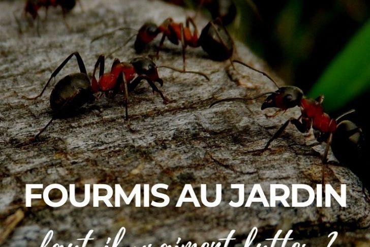 Fourmis Dans Le Jardin Nouveau Fourmis Au Jardin Faut Il Lutter Pourquoi Ment