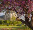 Jardin Du Louvre Best Of evening In Jardin Des Tuileries with Musee Du Louvre Paris France
