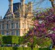 Jardin Du Louvre Élégant Springtime In Jardin Des Tuileries with Musee Du Louvre