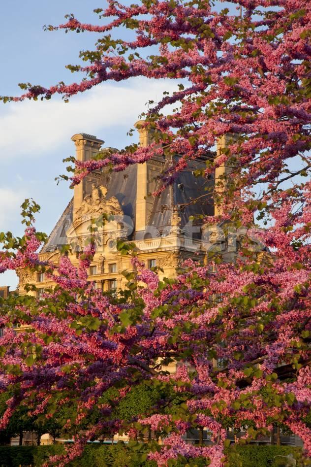 Jardin Du Louvre Nouveau Trees In Jardin Des Tuileries with Musee Du Louvre Paris France
