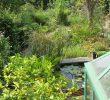 Jardin En Pente solution Beau Le Jardin Nature De Philippe Delwiche La Terre Est Un Jardin