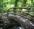 Le Jardin Des Papillons Beau Martinique