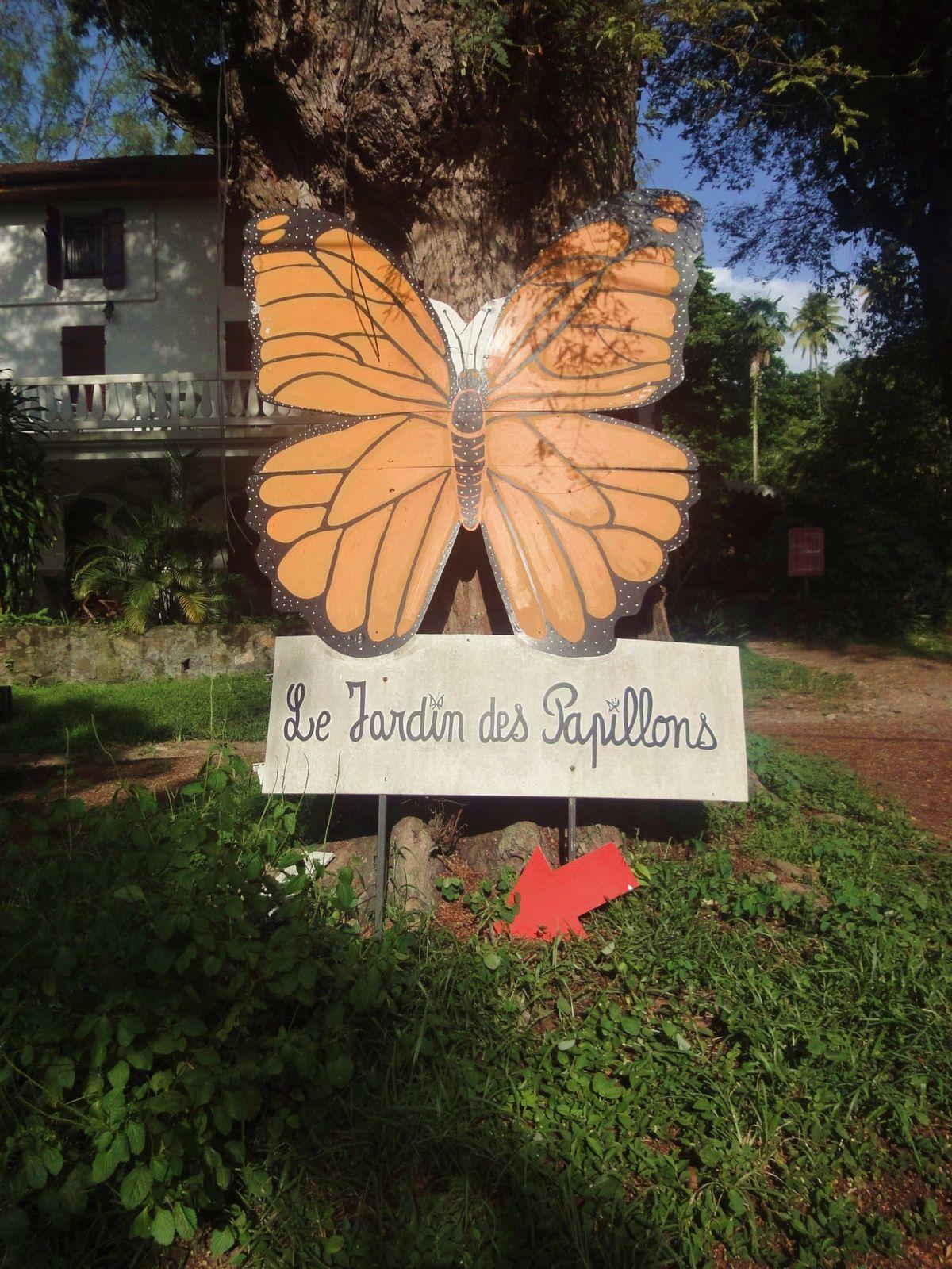 randonée à la montagne pelée visite du jardin des papillons et plage