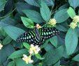 Le Jardin Des Papillons Beau Un toon Au Canada En Famille Au Jardin Botanique Au Milieu