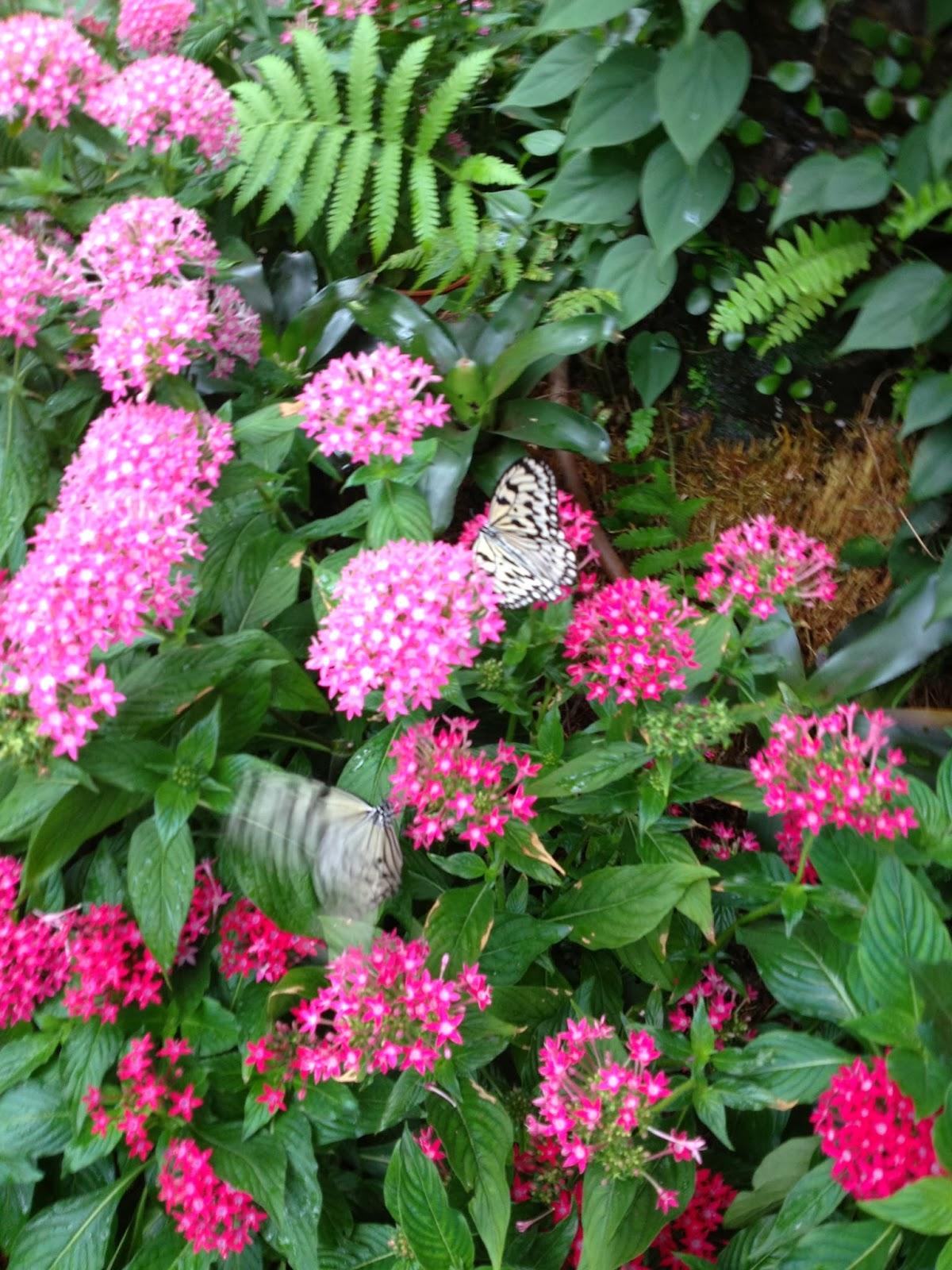 Le Jardin Des Papillons Best Of Six Mois  L Autre Bout Du Monde Aéroport De Singapore