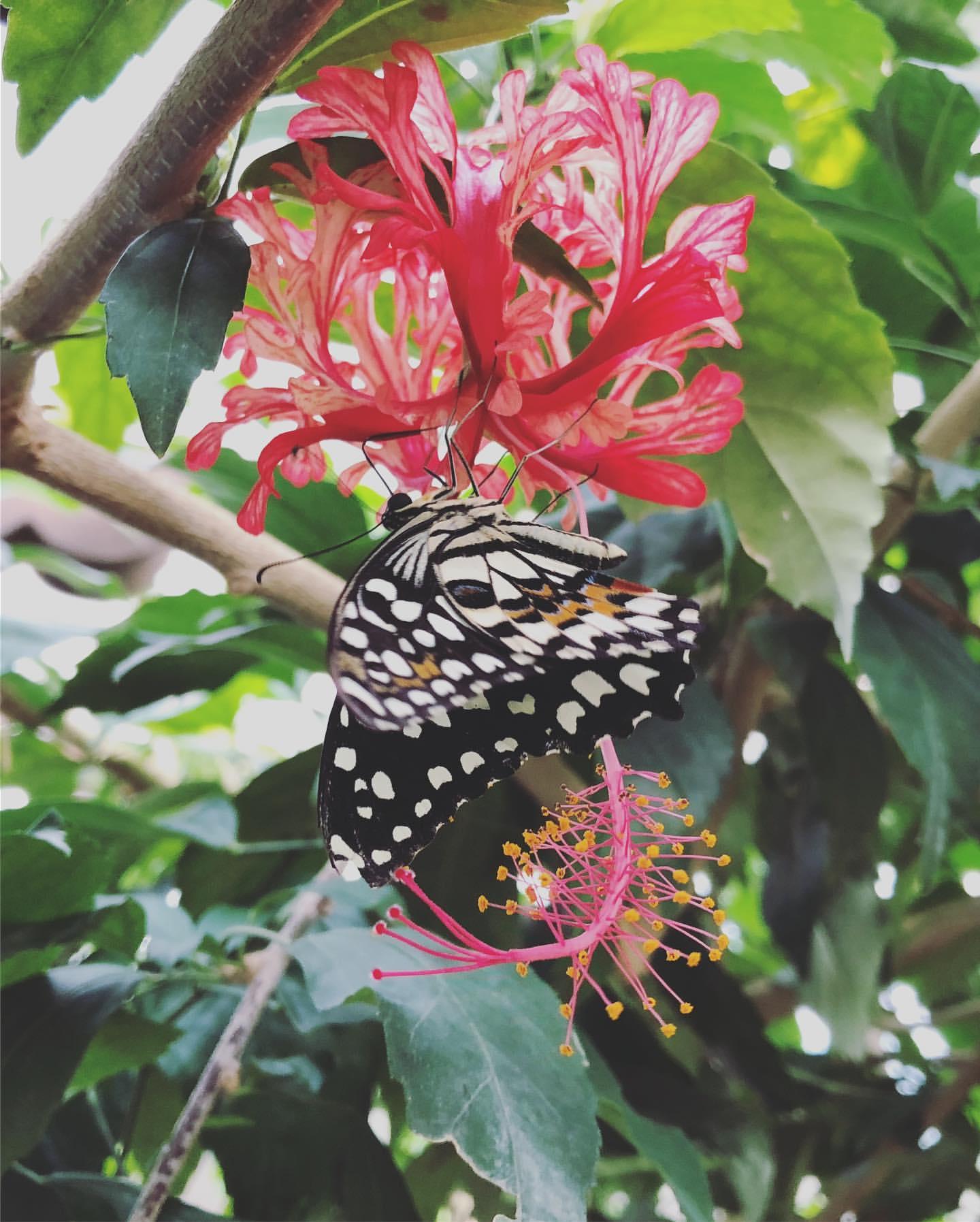 Le Jardin Des Papillons Charmant Instagram Posts at Jardin Des Papillons Grevenmacher