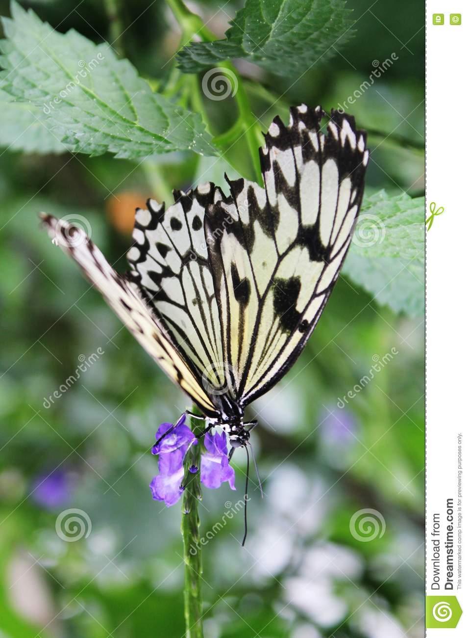 butterflies butterflies garden butterfly jardin des papillons located town grevenmacher near moselle river eastern
