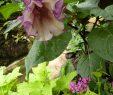 Le Jardin Des Papillons Élégant Classe 652 Du Cll Le Jardin Des Papillons Rénové  Grevenmacher