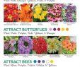 Le Jardin Des Papillons Élégant Natural attraction