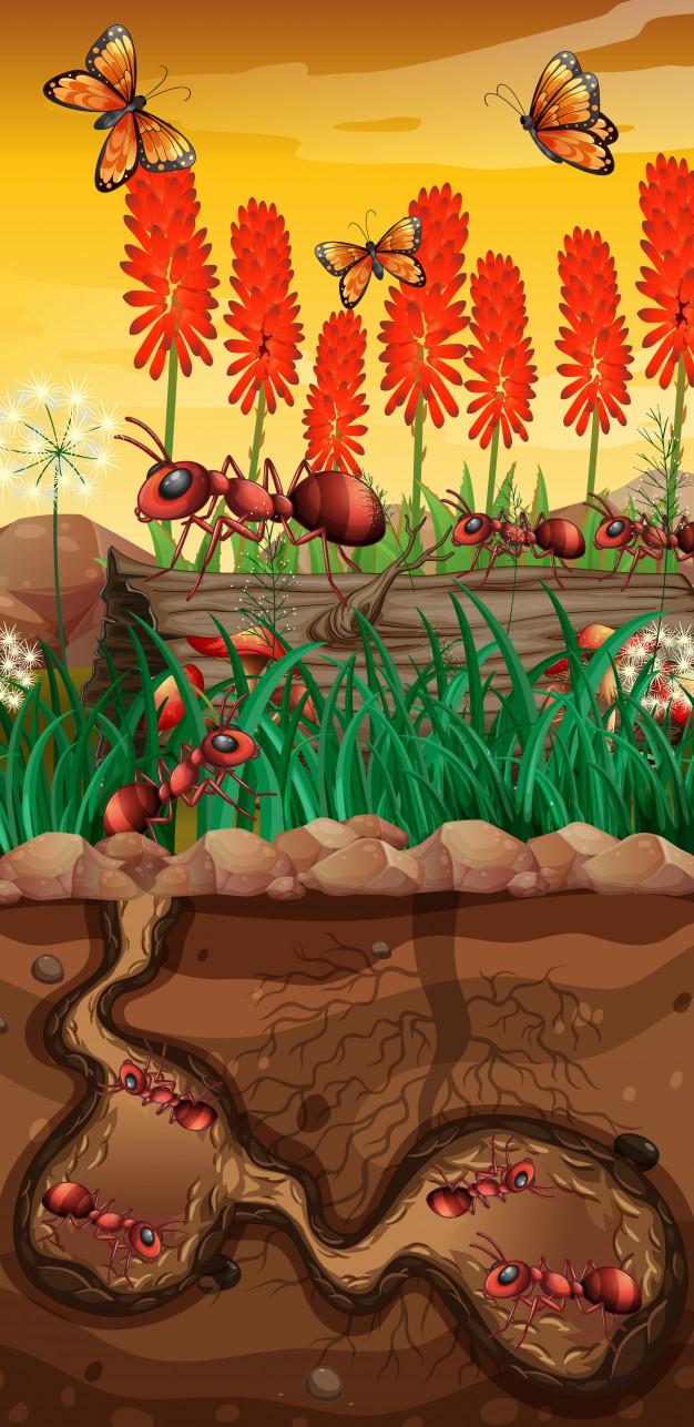 nature papillons fourmis dans jardin 1308