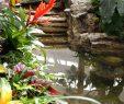 Le Jardin Des Papillons Frais Le Jardin Aux Papillons Vous Accueille  Partir Du Mois D