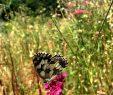 Le Jardin Des Papillons Frais soleil Estival Et Papillons Dans Le Jardin Des Vagabondes